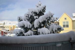 Snow Acceptance
