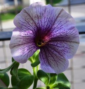 Spring Flowers (2)